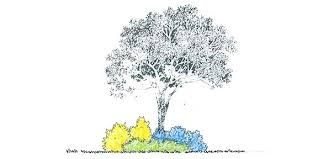 trees for landscape design mreza