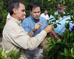 rubio putnam visit stricken auburndale citrus grove news the