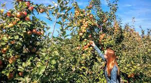 where to go apple picking near saratoga springs