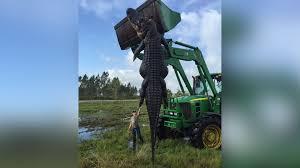 Alligators In Georgia Map Alligator On Lake Sinclair Caught On Camera 13wmaz Com