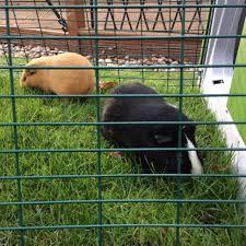 Guinea Pig Cages Cheap Eglu Go Guinea Pig Hutch Guinea Pig Products Omlet