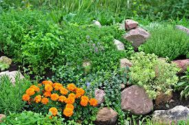 Creating A Rock Garden Rock Garden Ideas Sustainablepals Org