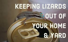 How To Get Rid Of A Skunk In Your Backyard How To Get Rid Of Lizards Hubpages