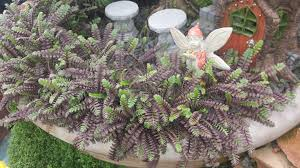 best plants for fairy gardens