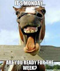 Monday Meme Funny - it s monday are you ready for the week meme funny horse face