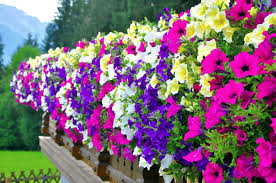 Different Types Of Garden - winter flowers in india winter flowers name and images flowers