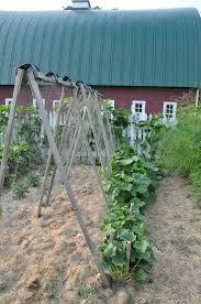 vegetable garden just two farm kids