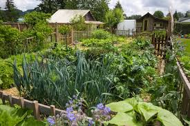Edible Garden Ideas Vote For The Best Edible Garden In The Gardenista Considered