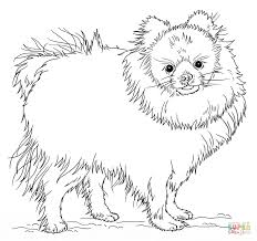 pomeranian puppy coloring free printable coloring pages