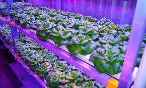 http verticalharvesthydroponics com media hydroponic farm