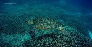 ultra high definition underwater stock footage