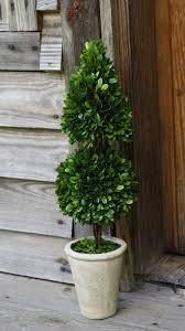 Preserved Boxwood Topiary Trees Amazon Com Preserved Boxwood Cone Topiary Mixed 24