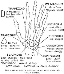 practical art anatomy e g lutz