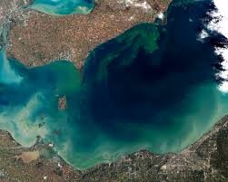 algal bloom wikipedia