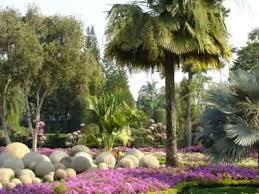 Largest Botanical Garden by Nong Nooch Tropical Botanical Garden Pattaya Entrance Fee