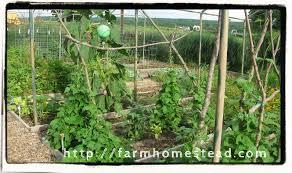 vegetable gardening made easy farm homestead