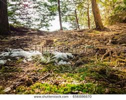 Tropical Dry Forest Animals And Plants - tropical dry forest stock images royalty free images u0026 vectors