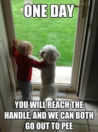 Funny Animal Memes Tumblr - funny animals meme tumblr animals best of the funny meme