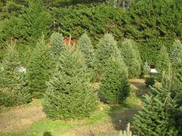 pine valley christmas tree farm christmas lights decoration