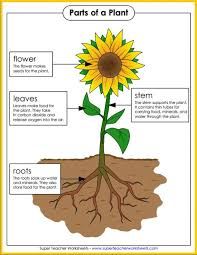 15 best seasons super teacher worksheets images on pinterest