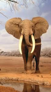 imagenes de animales whatsapp fondos para whatsapp de animales imágenes wallpappers