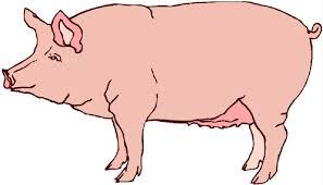 cartoon pig clip art free vector free download free