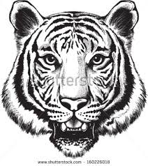 black and white vector sketch of a tiger s branding logo