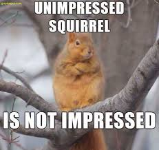 Squirrel Meme - funny picture of the day ft squirrel memes pinterest squirrel