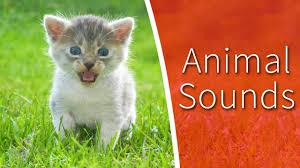 animal sounds for kids 34 amazing animals youtube