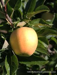 Apple Tree In My Backyard Why Is My Little Fruit Falling Off My Fruit Tree Stella Otto