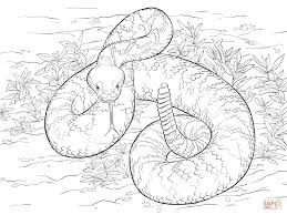 10 images of rattlesnake coloring pages snake coloring pages