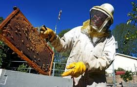 urban beekeeping raises southern california concerns the