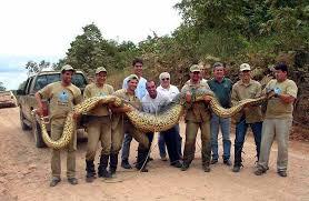 vidio film ular anaconda world biggest snake anaconda biggest snake in the world