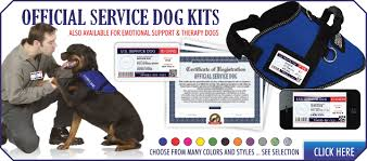 Comfort Dog Certificate Service Dog Equipment Supplies And Documentation Service Dog