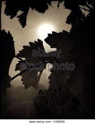 sun breaks through stock photos sun breaks through stock images