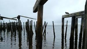 beaches atlantic cape dead pilings pier ocean trees cod tide sea