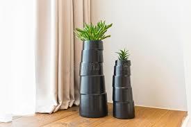 pot de chambre b usines dans le pot de fleurs décoration de chambre d hôtel photo