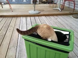 kitty litter box 8 steps