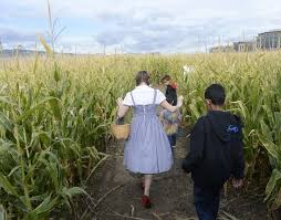 thanksgiving point corn maze pays tribute to wizard of oz now