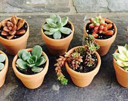 Flower Pot Wedding Favors - potted succulent etsy