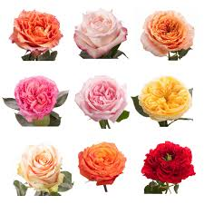 roses colors choose your colors garden roses flower muse