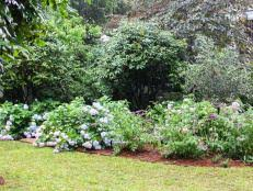 low maintenance plants for easy landscaping diy