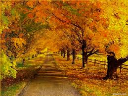 fall pictures backgrounds tianyihengfeng free download
