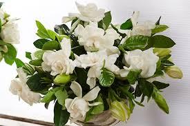 gardenia flower best practices gardenias in a box ubloom
