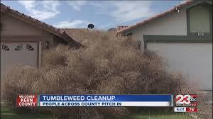 tumbleweed clean up begin across kern county youtube