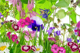 unusual fantastic small garden flowers plants and fruits