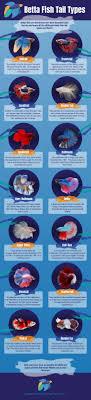best 25 best aquarium fish ideas on best fish tanks