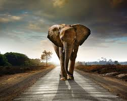 cool elephant wallpaper elephant roads sunrise and sunset animals nature wallpaper 1600x1280