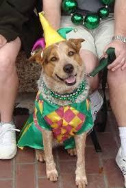 mardi gras jester ribbon dog custom mardi gras dog costume 1a for mardi gras