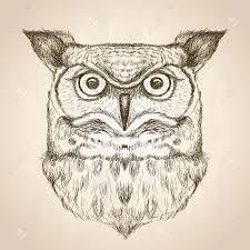 sketch illustration of an owl head front view vector wildlife